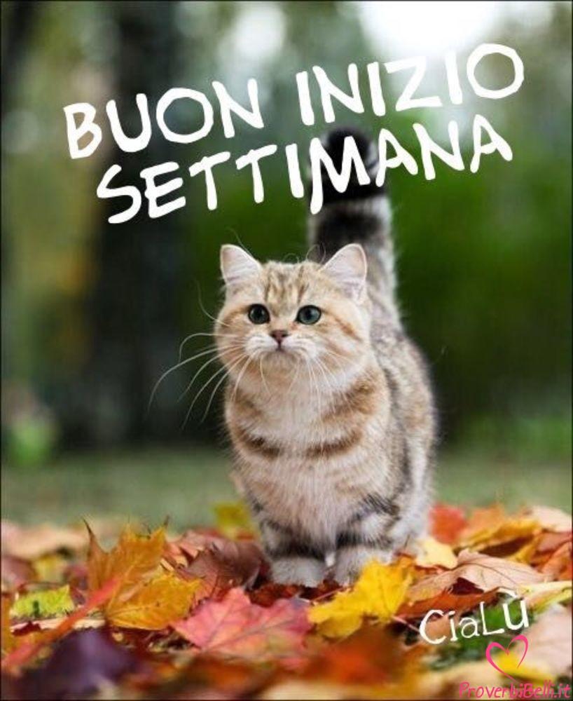 Lunedì Immagini belle whatsapp